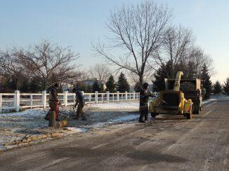 Dead Ash Tree Removal